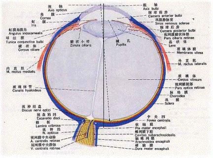 眼镜行业组织架构图
